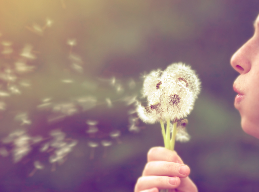 a girl blowing on a dandelion done with a vintage retro instagra